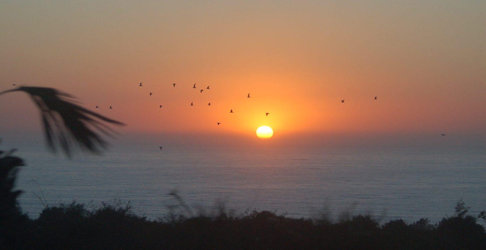 Sonnenaufgang in Agadir mit Palmen und Atlantik